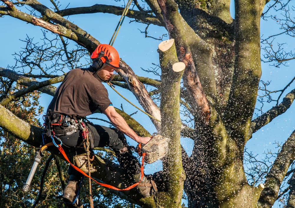 bästa säsongen för trädfällning