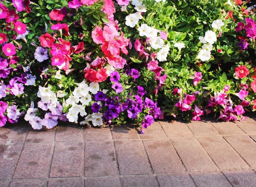 plantera blommor vår
