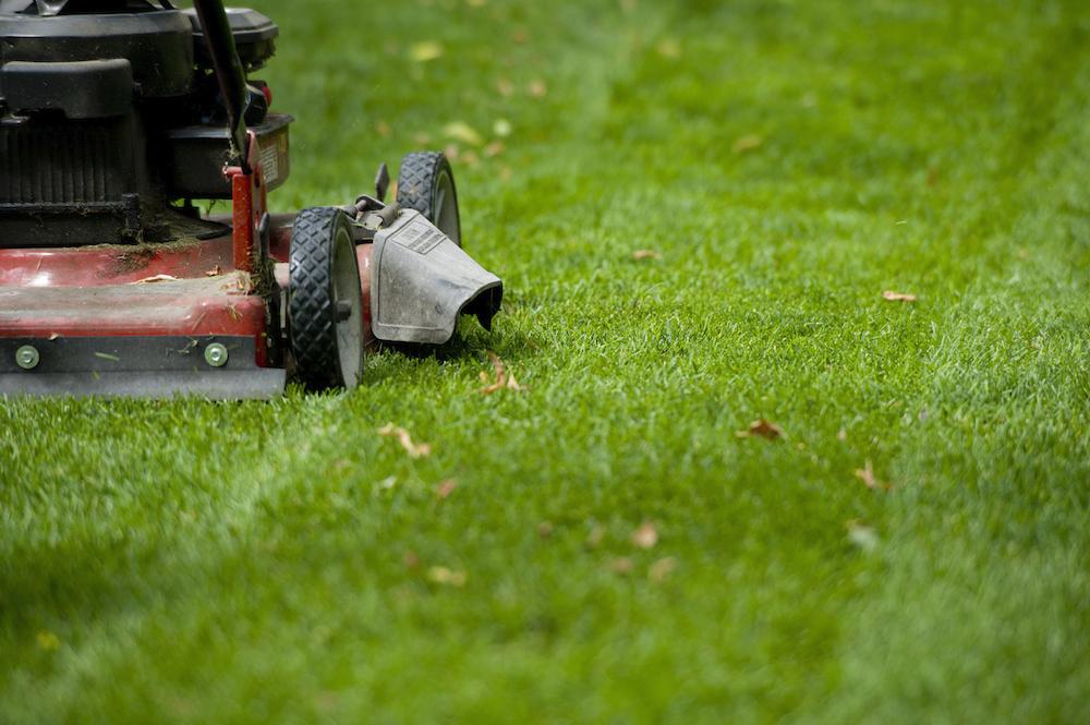 Tradgårdsfix gräsmatta