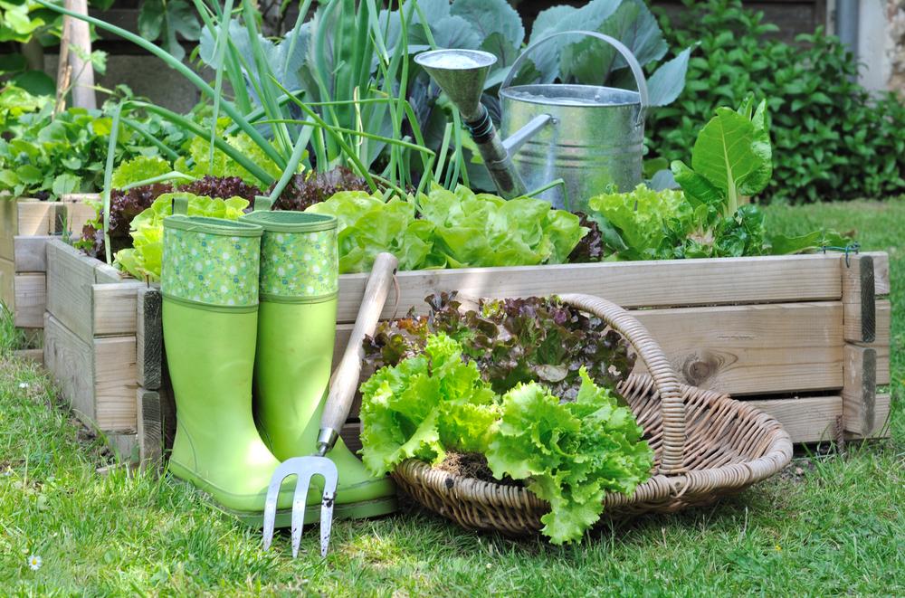 trädgårdsfix grönsaksodling
